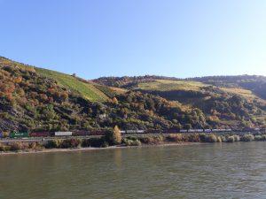 Weinanbau und Klimawandel